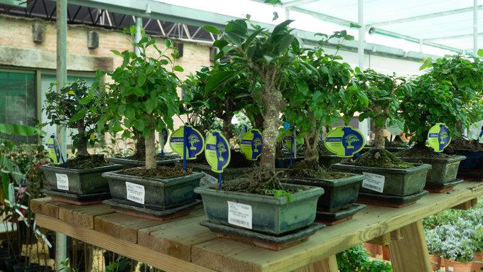 concurso ala 30 bonsai san javier