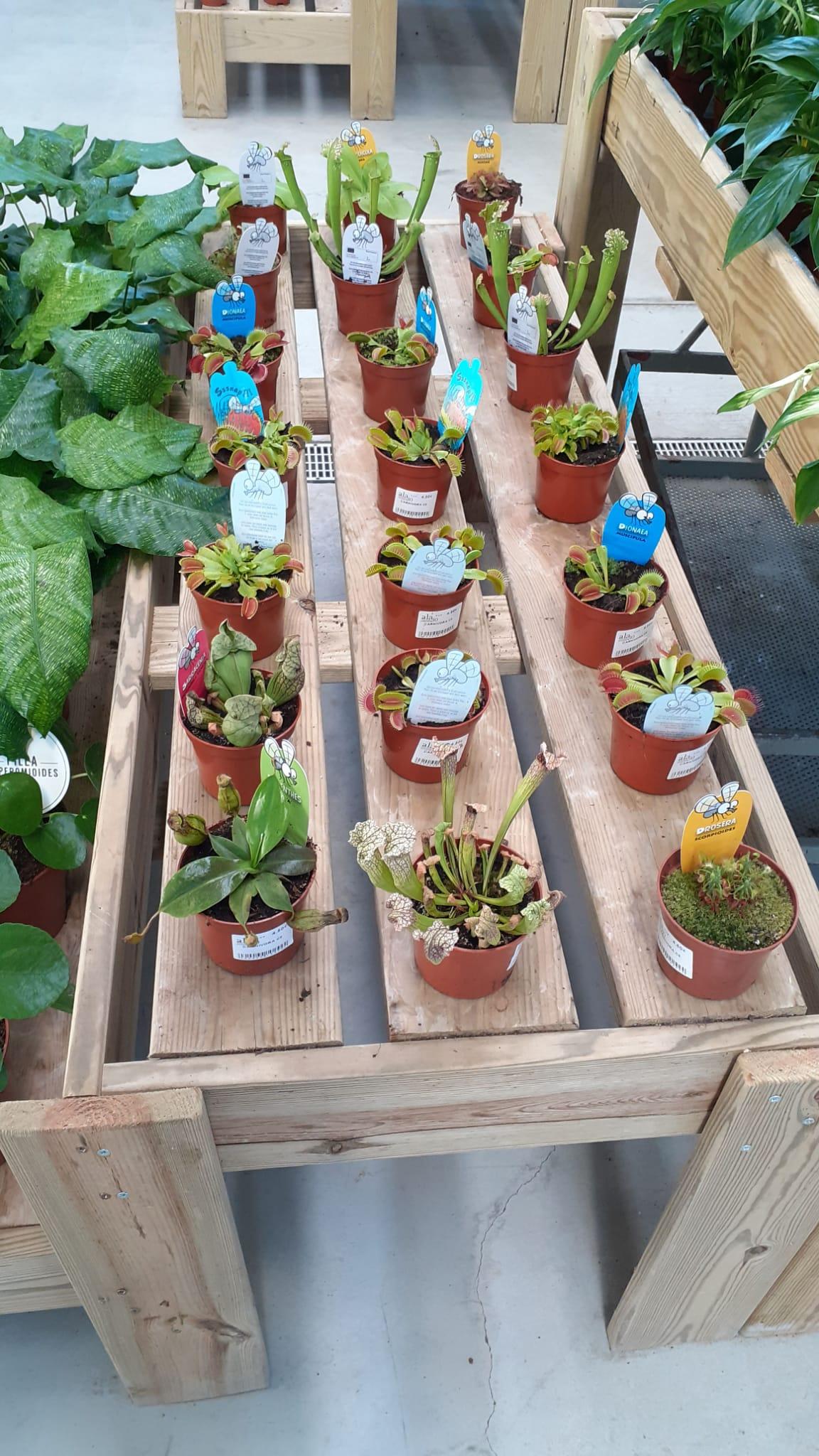 plantas carnivoras ala 30