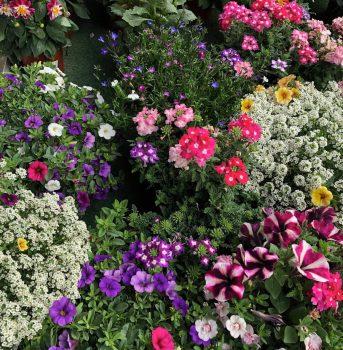 flores varias ala 30 centro de jardineria