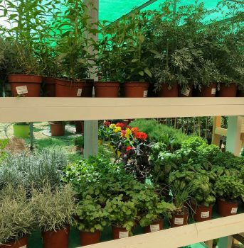 macetas aromáticas ala 30 centro de jardinería garden