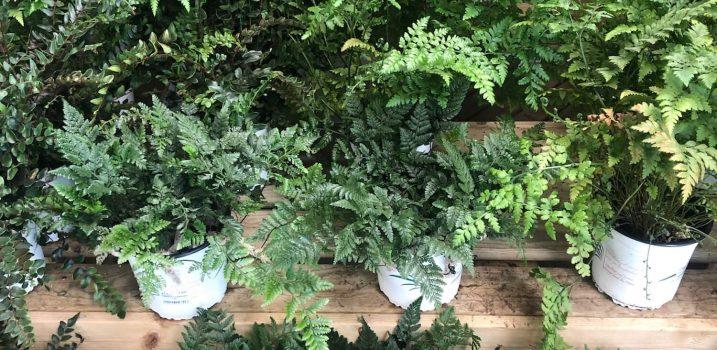 garden plantas ala 30 centro de jardnería