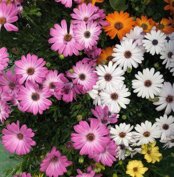 flores varias garden centro de jardinería ala 30