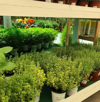 ala 30 plantas aromáticas garden centro de jardinería