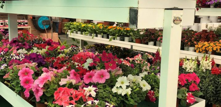geranios garden ala 30 centro de jardinería