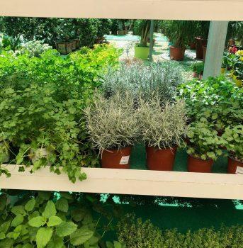 varias ala 30 garden centro de jardinería