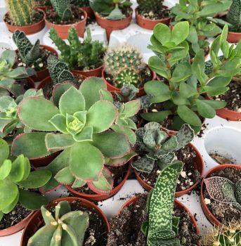 suculentas garden ala 30 centro de jardinería