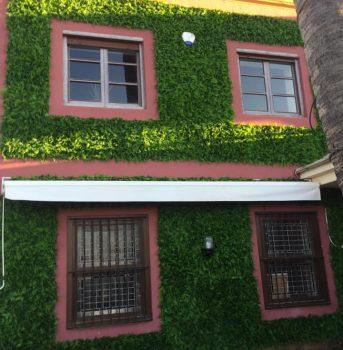 yedra paisajismo ala 30 centro de jardinería garden