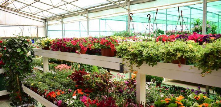 flores jardín ala 30 centro de jardinería garden