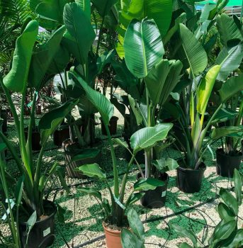 arbustos ala 30 garden centro de jardinería